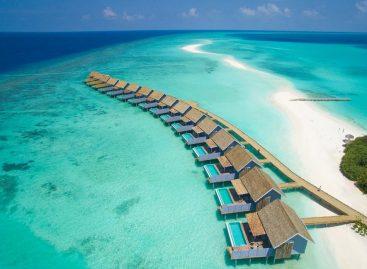 Memorable bird encounters in the Maldives resort