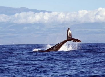 Whale Watching Tours That You Will Always Remember
