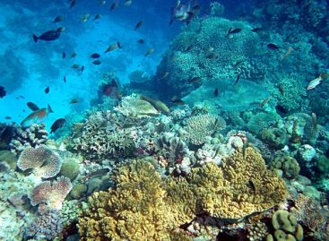 Investing Time into The Underwater Ecosystem of Bermuda