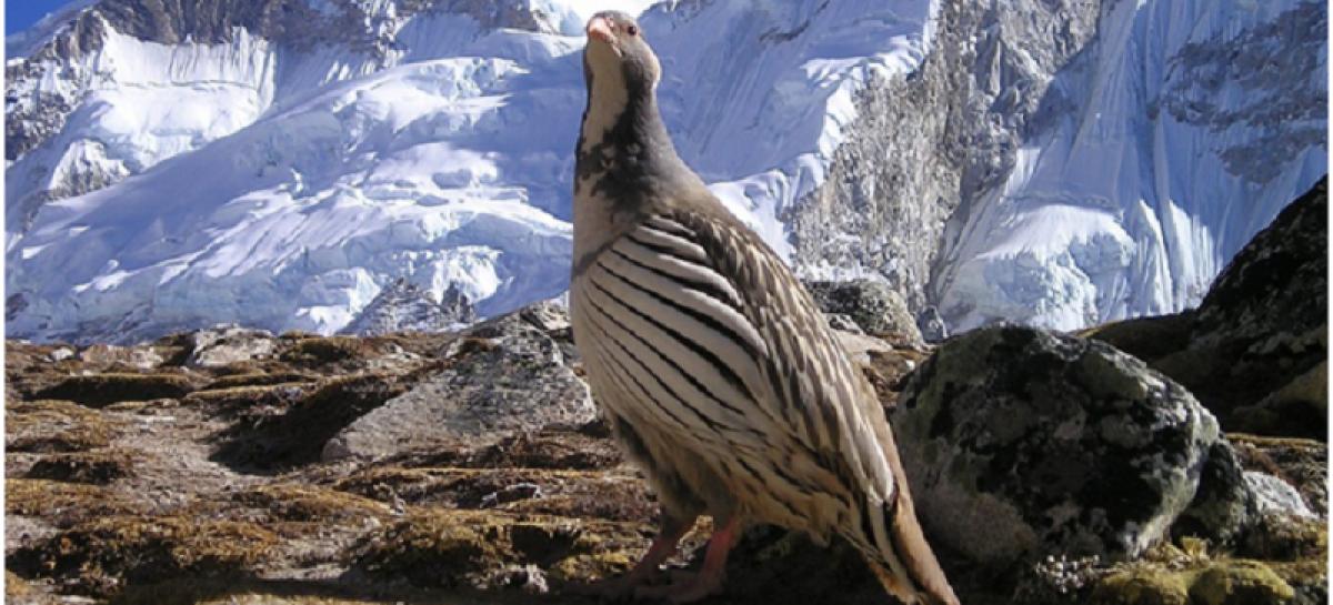 Top 7 Facts About Manaslu Trekking